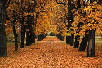 golden leaves on the ground in autumn in the cemetery