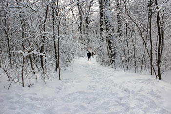a snow covered path in the woods