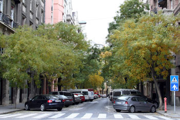 Falk Miksa Street lined with trees and parking cars in early autumn