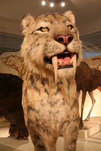 saber_toothed_tiger_ice_age_budapest