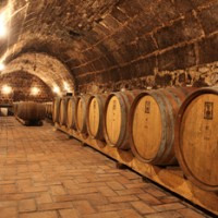 wooden barrels in a large vaulted cellar