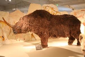 wooly_rhino_ice_age_budapest