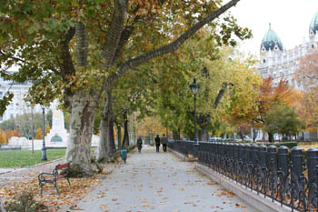 plane trees lining a walkway on Szabadsag Square in late autuman