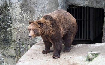 a brown bear standing in front of his cave's entrance