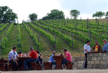 people sitting at benches and sipping wine at a green vineyard